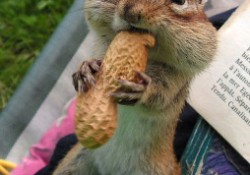 ambition_squirrel_02