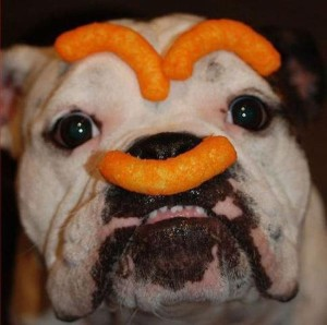 Dog-Eating-Cheetos