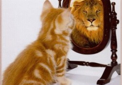 Cute Cat Looking In Mirror, Sees Lion