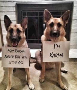 German Shepherds Karma