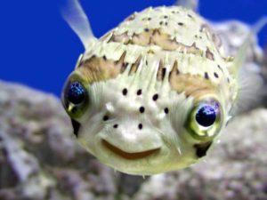 Cute little fish