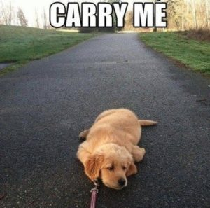 Dog tired, carry me