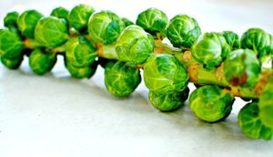 brussels-sprout-stalk