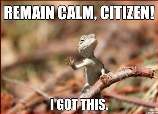 funny-lizard