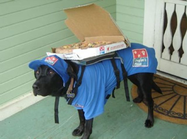 delivery-dog