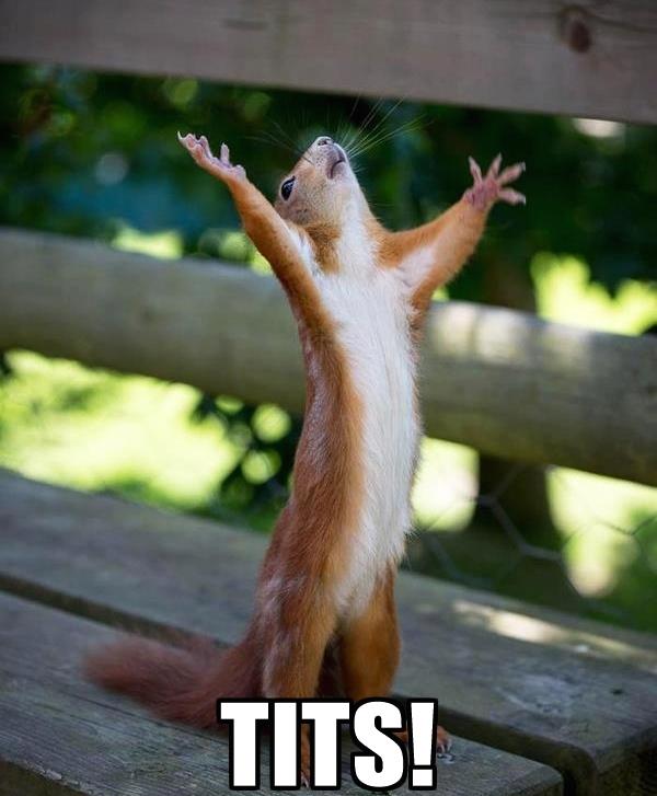 tits squirrel