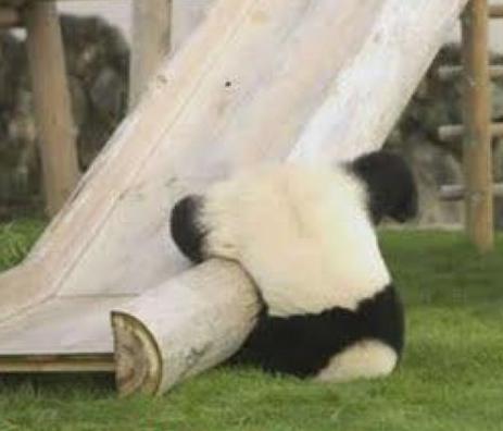 Panda Fell off Slide