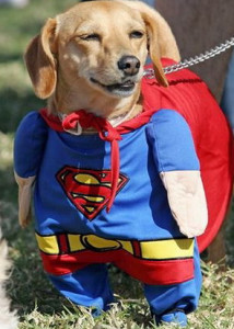 Superman Dog!