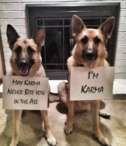 German Shepherds Karma