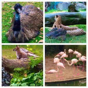 Auckland Zoo with Emu Flamingos Kangaroo and Cheetahs
