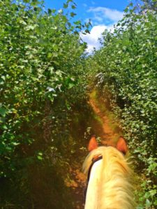 Horseback riding in the mountains on New Zealand