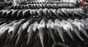 Tuna in Taiwan