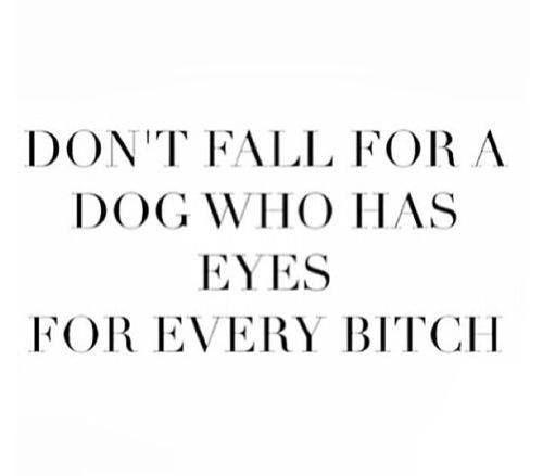 dog bitch