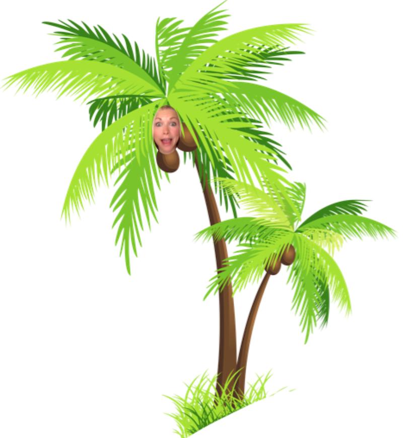 GiGi Coconut Tree