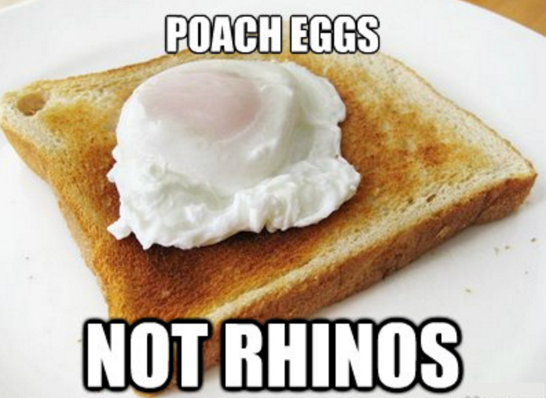 Poaching Eggs Not Rhinos