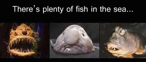 fish-in-the-sea