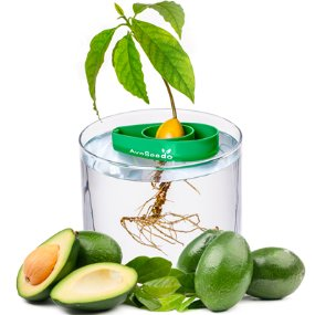 avocado-grower