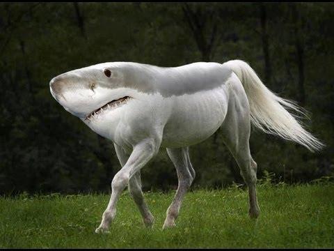 land shark horse