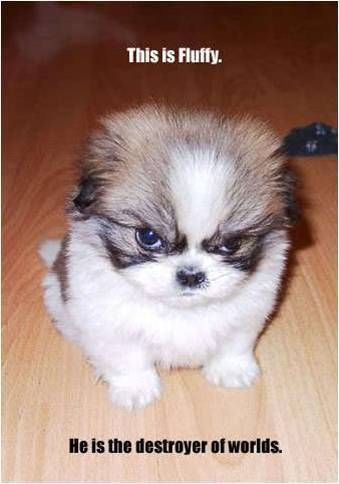 cute intimidating dog