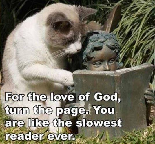 cat_reading