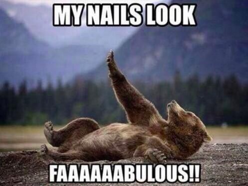 bear looking at nails