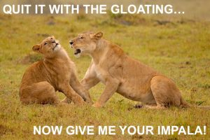 LIONS AFRICA YELLING AT EACH OTHER