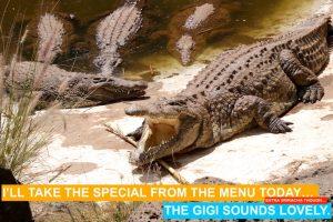 crocodiles hungry for gigi eats celebrities