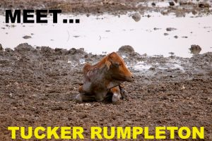 TUCKER RUMPLETON