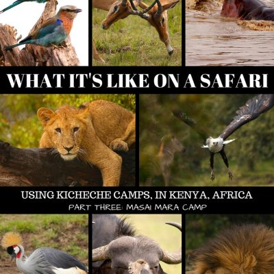 A Souped Up Ending… Part Three (The Final Part) Of Our Safari In Africa